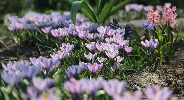 цветы-13