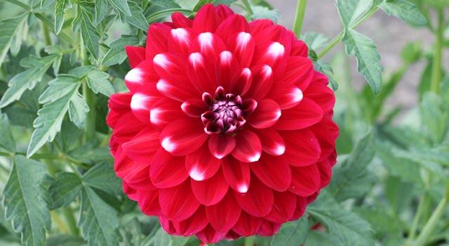 цветы-14