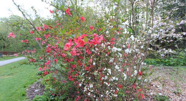 цветы-16