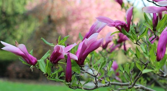 цветы-19