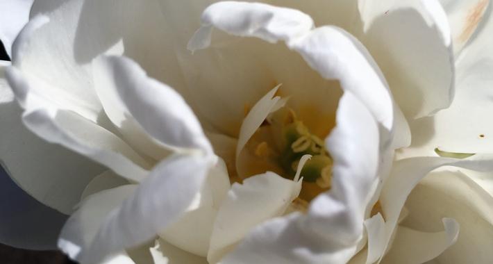цветы-22